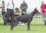 Ayrin  in Special Doberman Club Show